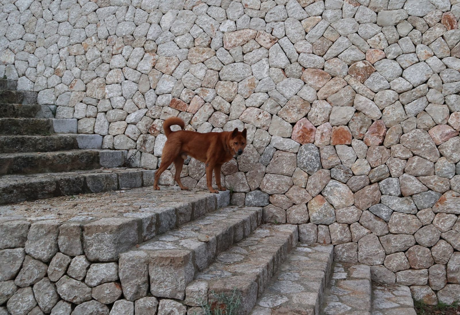 Koldbrann_on_stairs_Mallorca_ dog-life-in-mallorca | blog - Cecilie's PenAndWok.com